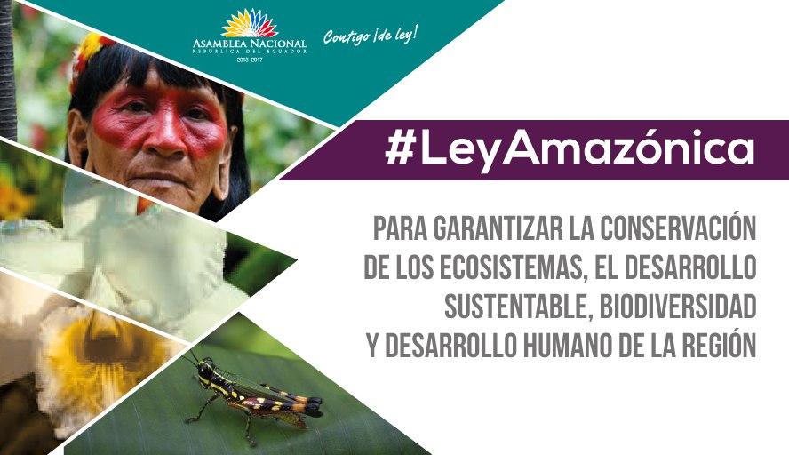 LEY AMAZÓNICA