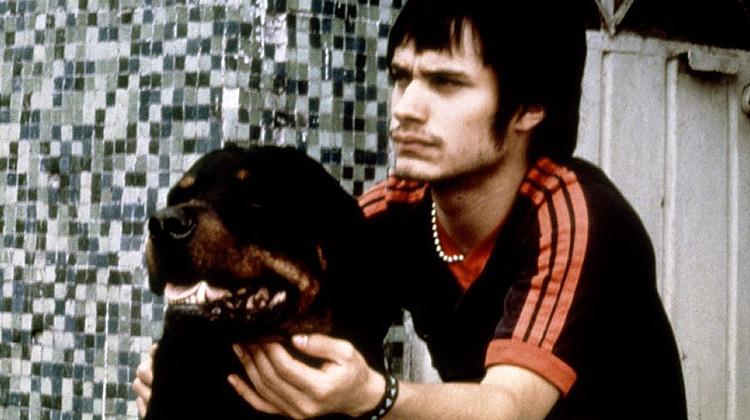Amores Perros.